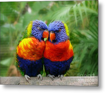 In Love Lorikeets Metal Print by Peggy  Franz