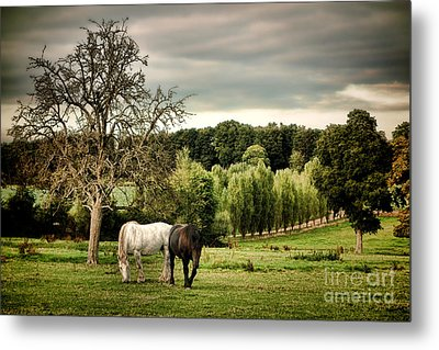 In Perche Metal Print by Olivier Le Queinec