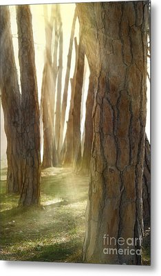 In Pine Forest Metal Print by Mythja  Photography