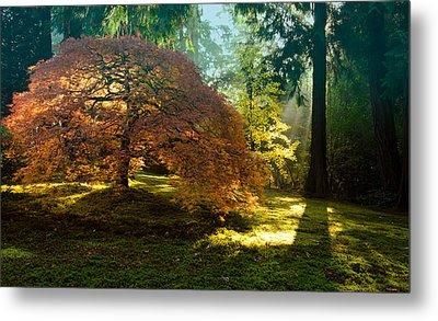 In The Gentle Autumn Light Metal Print by Don Schwartz