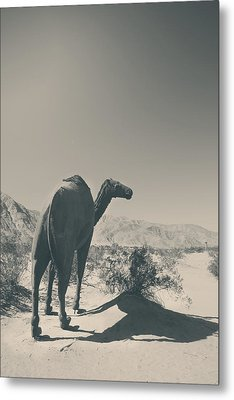 In The Hot Desert Sun Metal Print by Laurie Search