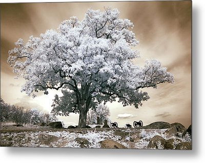 Infrared Tree On A Hill In Gettysburg Metal Print by Paul W Faust -  Impressions of Light
