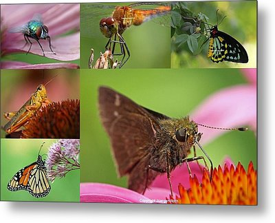 Insect Macro Photography Art Metal Print by Juergen Roth