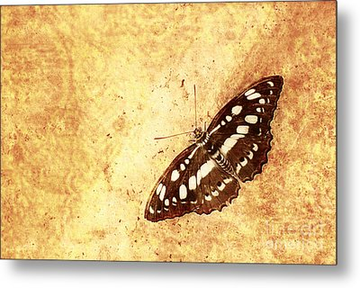 Insect Study Number 66 Metal Print by Floyd Menezes