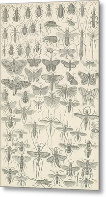 Insects Metal Print by English School