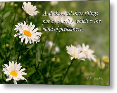 Inspirational - Daisy - Colossians 3-14 Metal Print by Mike Savad