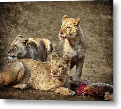 Interrupted Dinner D9729 Metal Print by Wes and Dotty Weber