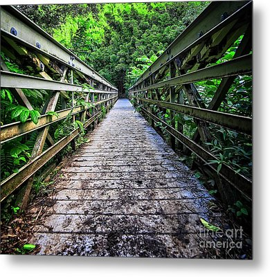 Into The Jungle  Metal Print by Edward Fielding