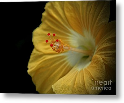 Invitation To Beauty Hibiscus Flower  Metal Print by Inspired Nature Photography Fine Art Photography