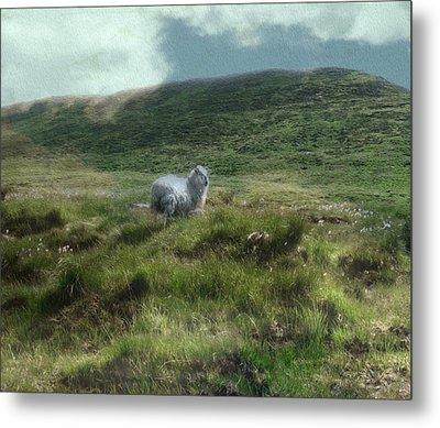 Irish Countryside Metal Print by Kandy Hurley
