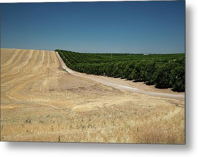 Irrigated Orchard Metal Print by Jim West