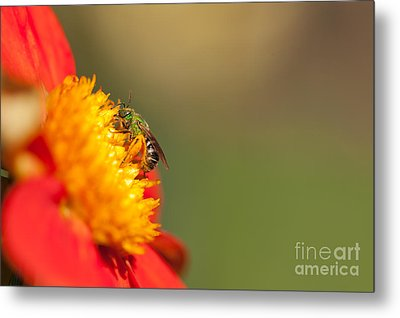 It Is All About The Buzz Metal Print by Beve Brown-Clark Photography
