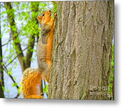 It Is Hard Work Getting To The Top Metal Print by Tina M Wenger