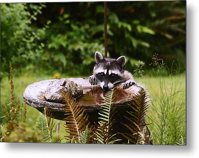 It Is Not Just For The Birds Metal Print by Kym Backland