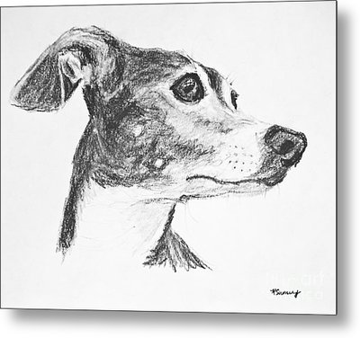 Italian Greyhound Sketch In Profile Metal Print by Kate Sumners