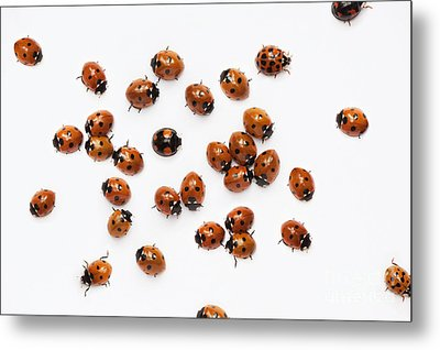Its A Bug Thing Metal Print by Tim Gainey