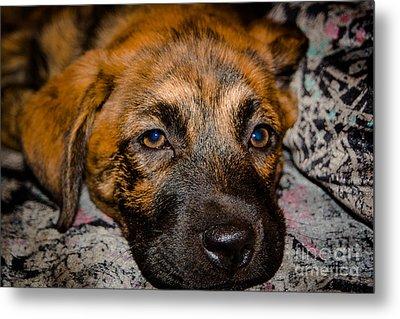 Its A Dogs Life Metal Print by Ronny Sczruba