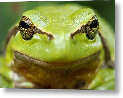 It's Not Easy Being Green _ Tree Frog Portrait Metal Print by Roeselien Raimond