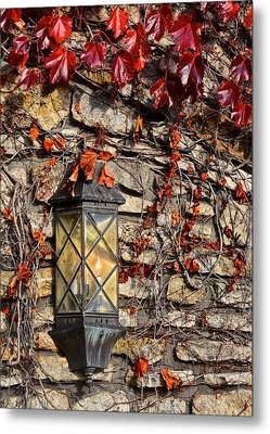 Ivy Lantern Metal Print by Frozen in Time Fine Art Photography