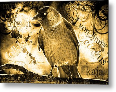 Jackdaw Metal Print by Toppart Sweden