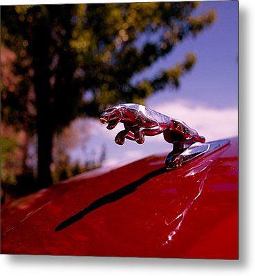 Jaguar Metal Print by Rona Black