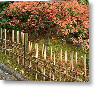 Japanese Maple, Acer Palmatum, In Fall Metal Print by William Sutton