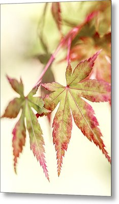 Japanese Maple Metal Print by Caitlyn  Grasso
