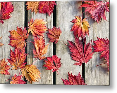 Japanese Maple Tree Leaves On Wood Deck Metal Print by David Gn