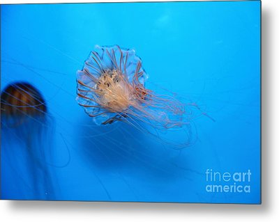 Jelly Fish 5d24944 Metal Print by Wingsdomain Art and Photography