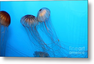 Jelly Fish 5d24945 Metal Print by Wingsdomain Art and Photography
