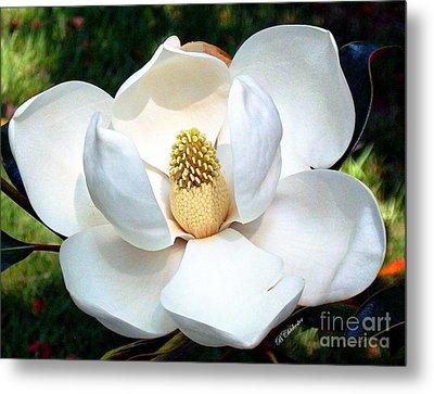 John's Magnolia Metal Print by Barbara Chichester