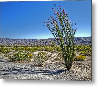 Joshua Tree - 19 Metal Print by Gregory Dyer