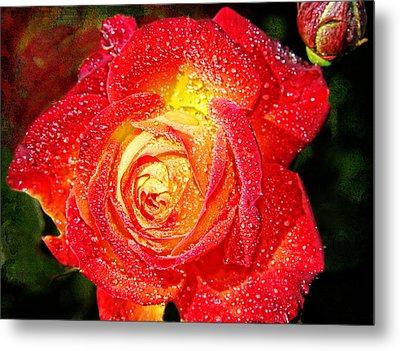 Joyful Rose Metal Print by Mariola Bitner