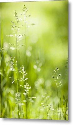 June Green Grass  Metal Print by Elena Elisseeva