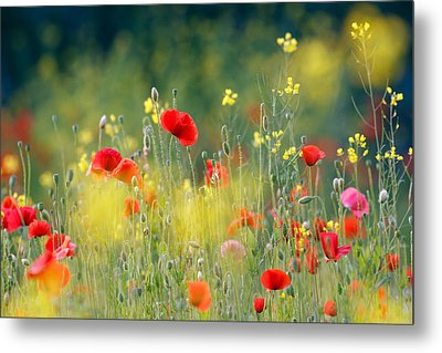Just A Perfect Day Metal Print by Roeselien Raimond