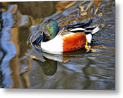 Just Ducky Metal Print by Marty Koch