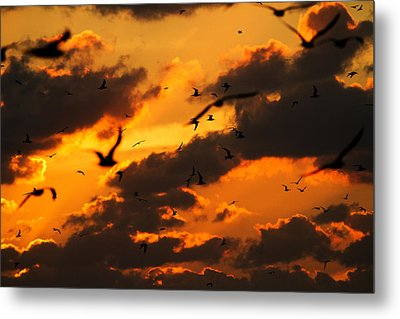 Key West Sunset With Bokeh Birds Metal Print by Mr Bennett Kent