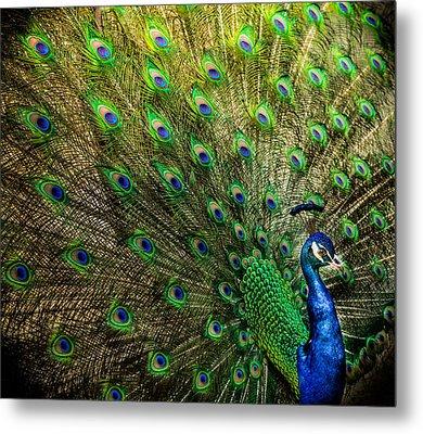 King Of Birds Metal Print by Karen Wiles