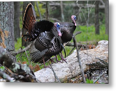 King Of Spring Metal Print by Todd Hostetter