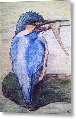 Kingfisher Metal Print by Andrea Walton