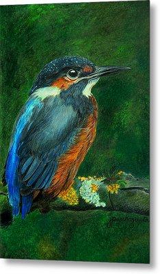 Kingfisher Drawing Metal Print by Janet Pancho Gupta