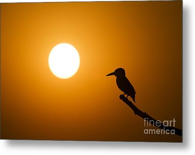 Kingfisher Sunset Metal Print by Tim Gainey