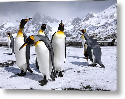 Kings At Right Whale Bay Metal Print by Oliver Prince