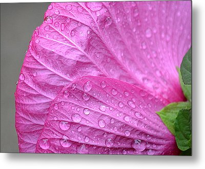 Kissing Pink Metal Print by Michelle Ayn Potter
