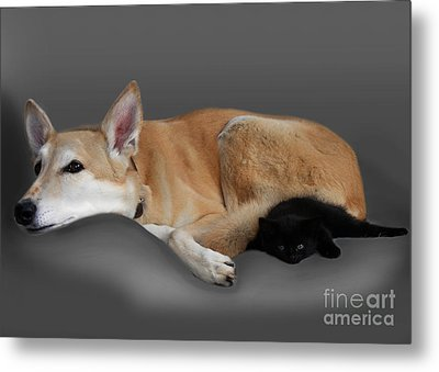 Kitten And Canine Metal Print by Linsey Williams