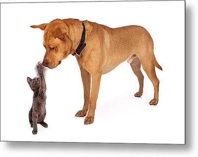 Kitten Batting At Nose Of Large Breed Dog Metal Print by Susan Schmitz