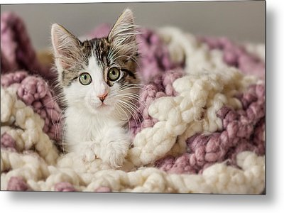Kitten In Afghan - Animal Rescue Portraits Metal Print by Andrea Borden