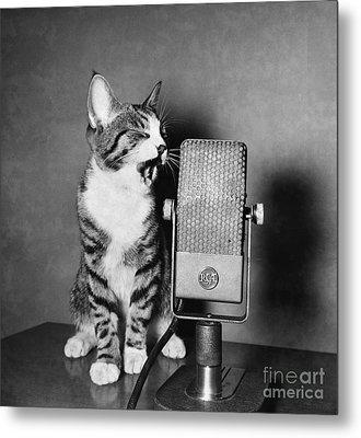 Kitten On The Radio Metal Print by Syd Greenberg