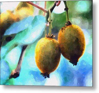 Kiwi Fruit Ripening On A Tree Metal Print by Lanjee Chee