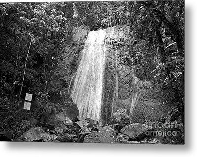 La Coca Falls El Yunque National Rainforest Puerto Rico Print Black And White Metal Print by Shawn O'Brien